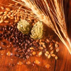 barley malt hops